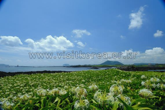 Crisum, Tokkiseom Island (Nando Island)