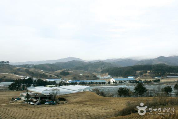 Desa Angin Uiyaji PyeongChang