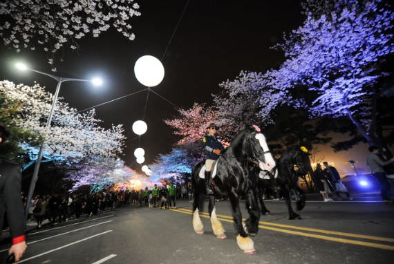 Festival Cherry Blossom Malam Hari Let's Run Park Seoul