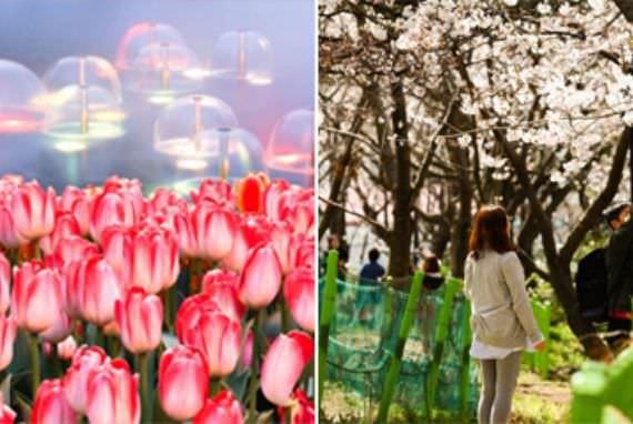 Festival Bunga Musim Semi Bulan Maret