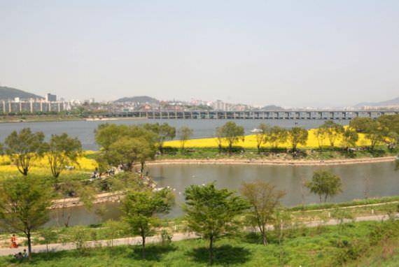 Festival Canola Seoraeseom Hangang akan Dimulai