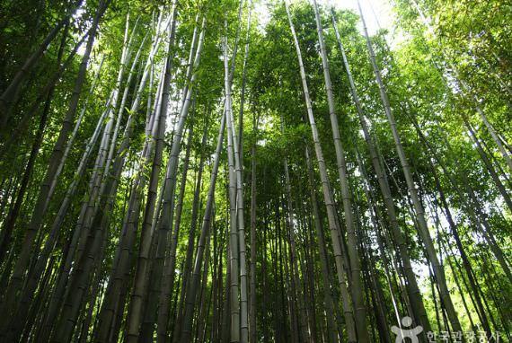Juknokwon (Kebun Bambu)