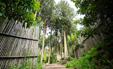 Jangheong Woodland Woodland