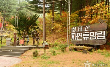 Photo_Hutan Rekreasi Nasional Cheongtaesan (국립 청태산자연휴양림)